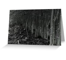 asparagus woods Greeting Card