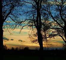 three trees by marysia wojtaszek