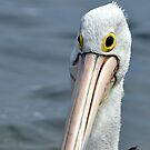 The pelican by Leigh Monk