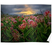 Milk Weed Poster