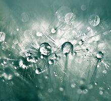 Dewdrops on Dandelion - 10 by BobbiFox