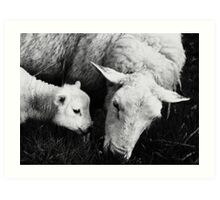 to dream of sheep - synchronicity  Art Print