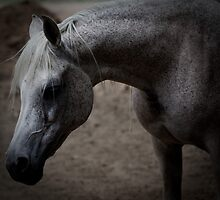 New Mexico ~ Horse by Rene Hales