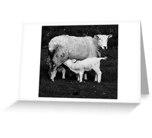 to dream of sheep - nourishment Greeting Card