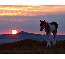 Dartmoor pony at sunset Photographic Print