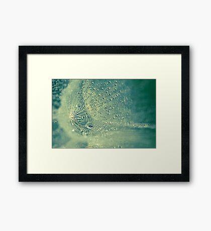 Dewdrops on Dandelion - 12 Framed Print