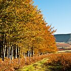 Tack Wood and Hay Bluff by Mark Zytynski