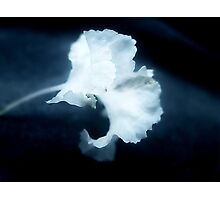 Blue for Wilma Photographic Print