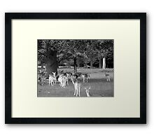 Richmond Park Deer Framed Print