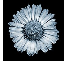Retro Daisy in Blue Photographic Print