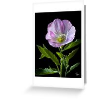 Mexican Evening Primrose Greeting Card