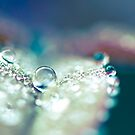 Dewdrop on a Leaf by BobbiFox