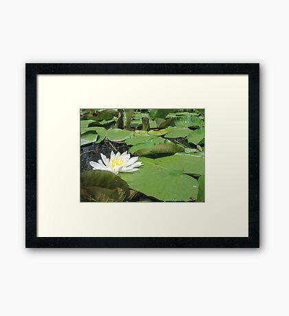 Green Lillies Framed Print