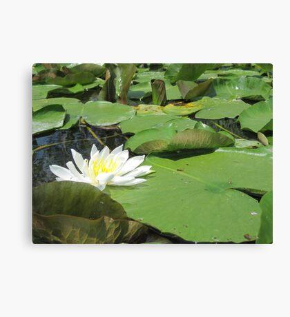 Green Lillies Canvas Print