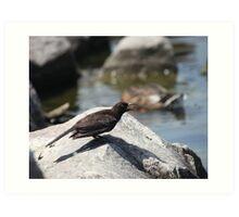 Posing Shore Bird Art Print