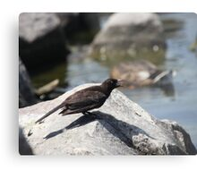 Posing Shore Bird Metal Print