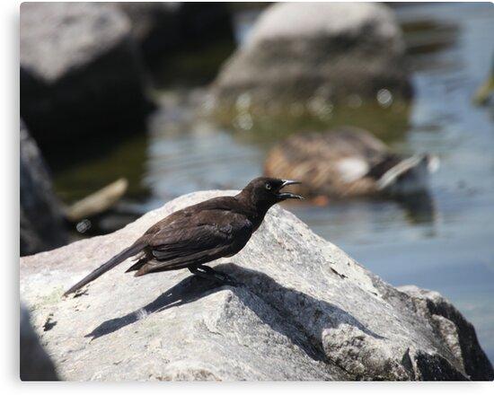 Posing Shore Bird by Thomas Murphy