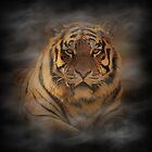 Tiger II by Sandy Keeton