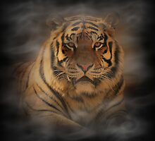 Tiger II by Sandy Keeton