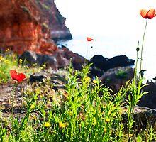 wild flower around the sea by plamenx