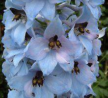 Beautiful Blue by JaxHunter