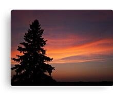 Lonesome Pine Canvas Print