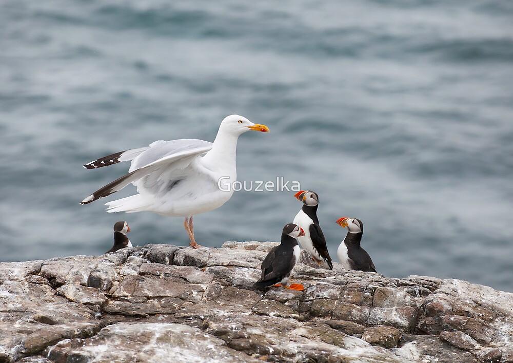 Birds World by Gouzelka