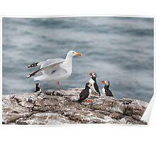 Birds World Poster