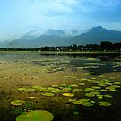 Dal Lake Srinagar by Naveen  Sharma
