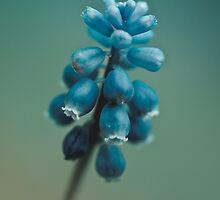 Spring Bluebells  by BobbiFox