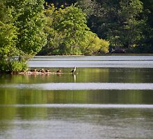 Green Lane Reservoir - Red Hill - Pennsylvania USA by MotherNature