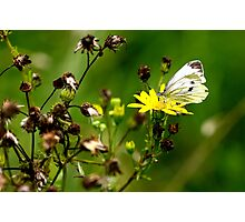 Mutual Attraction Photographic Print