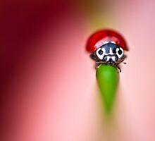 Pink Ladybug  by BobbiFox