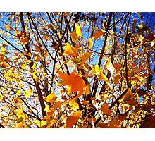 autum leaves Photographic Print