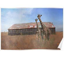 Where Giraffee roam or Rubber Necking?  Poster