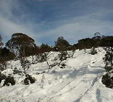 Weekend at Thredbo - Looking Up by Sally Haldane