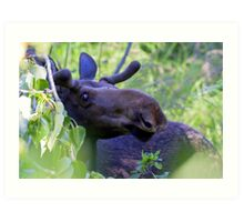 Young bull moose in the woods Art Print