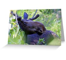 Young bull moose in the woods Greeting Card