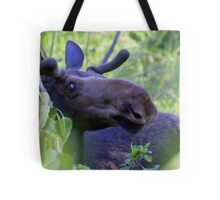 Young bull moose in the woods Tote Bag
