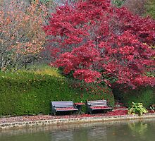 Bisley Gardens Bench - Mt Wilson NSW Australia by Phil Woodman