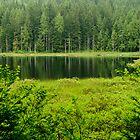 A View of Mike Lake by Michael Garson