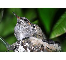 Two Baby Hummer Photographic Print