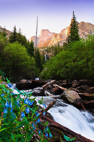 Morning in the Sangre De Cristo Mountains by Reese Ferrier