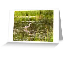 Giant Blue Heron at Bruce Pit Greeting Card