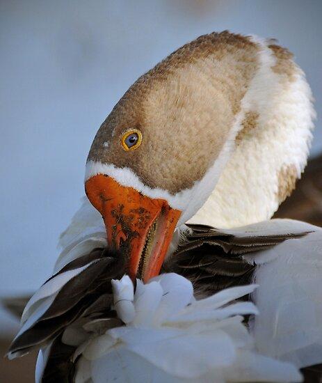 Goose by venny