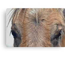 Pony Eyes Canvas Print