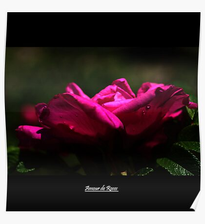 Amour de Roses Poster