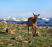 Rocky Mountains Morning  by Wojciech Dabrowski