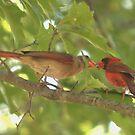 Cardinal Love by Brad Sumner