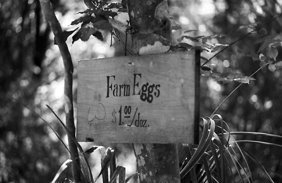 Farm Eggs by Frank Romeo